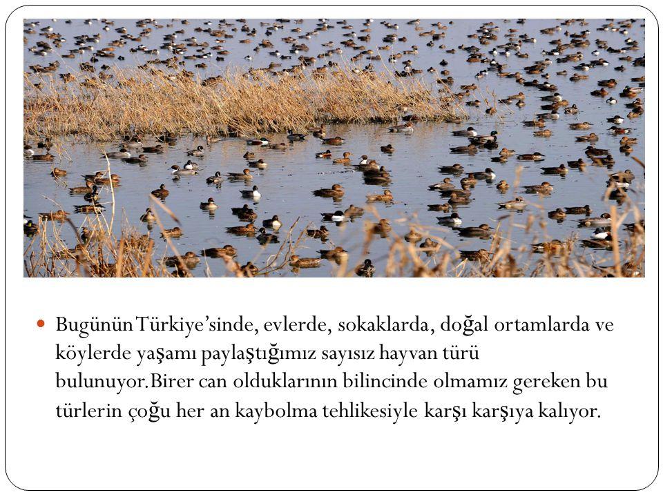 Bugünün Türkiye'sinde, evlerde, sokaklarda, doğal ortamlarda ve köylerde yaşamı paylaştığımız sayısız hayvan türü bulunuyor.Birer can olduklarının bilincinde olmamız gereken bu türlerin çoğu her an kaybolma tehlikesiyle karşı karşıya kalıyor.