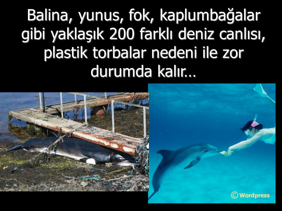 Balina, yunus, fok, kaplumbağalar gibi yaklaşık 200 farklı deniz canlısı, plastik torbalar nedeni ile zor durumda kalır…