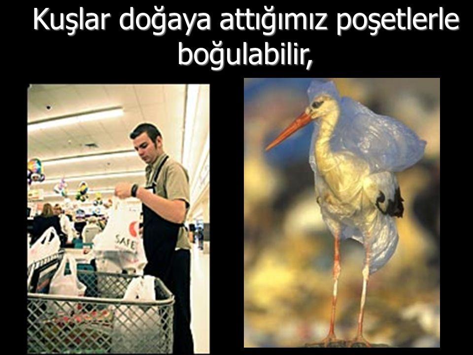 Kuşlar doğaya attığımız poşetlerle boğulabilir,