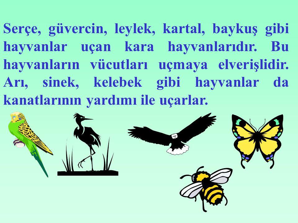 Serçe, güvercin, leylek, kartal, baykuş gibi hayvanlar uçan kara hayvanlarıdır.