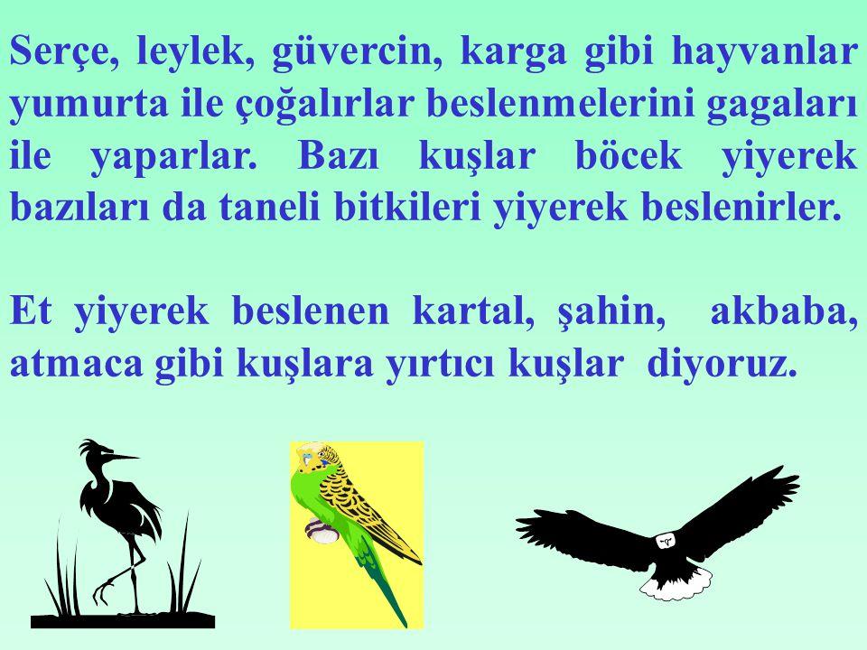 Serçe, leylek, güvercin, karga gibi hayvanlar yumurta ile çoğalırlar beslenmelerini gagaları ile yaparlar. Bazı kuşlar böcek yiyerek bazıları da taneli bitkileri yiyerek beslenirler.