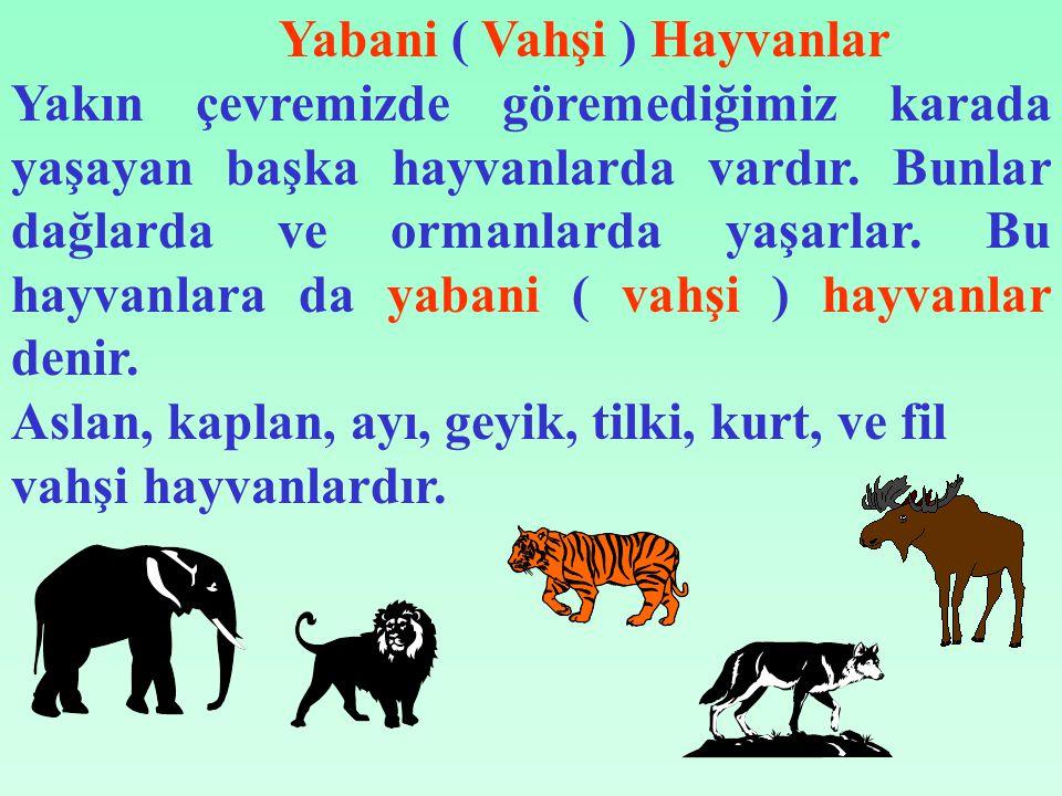 Yabani ( Vahşi ) Hayvanlar