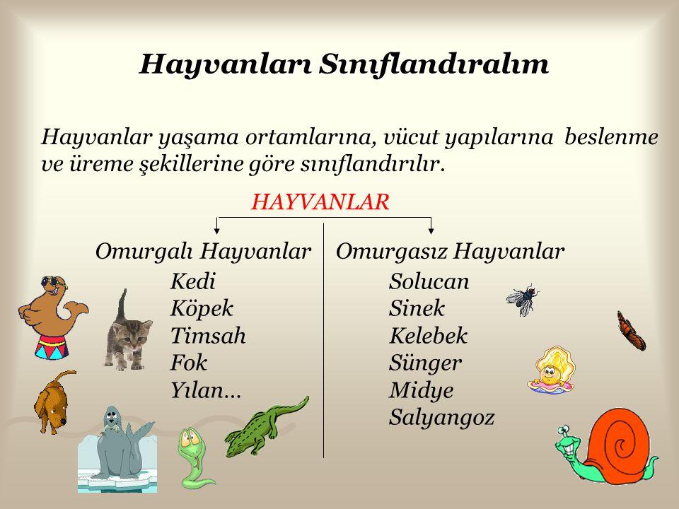 Hayvanları Sınıflandıralım