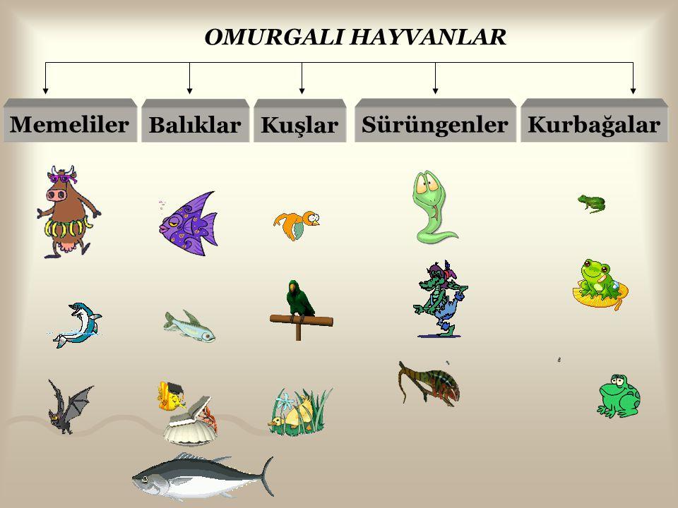 OMURGALI HAYVANLAR Memeliler Balıklar Kuşlar Sürüngenler Kurbağalar
