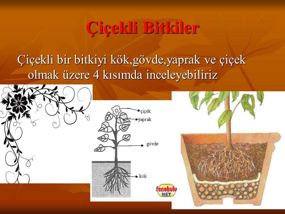 Çiçekli Bitkiler Çiçekli bir bitkiyi kök,gövde,yaprak ve çiçek olmak üzere 4 kısımda inceleyebiliriz.