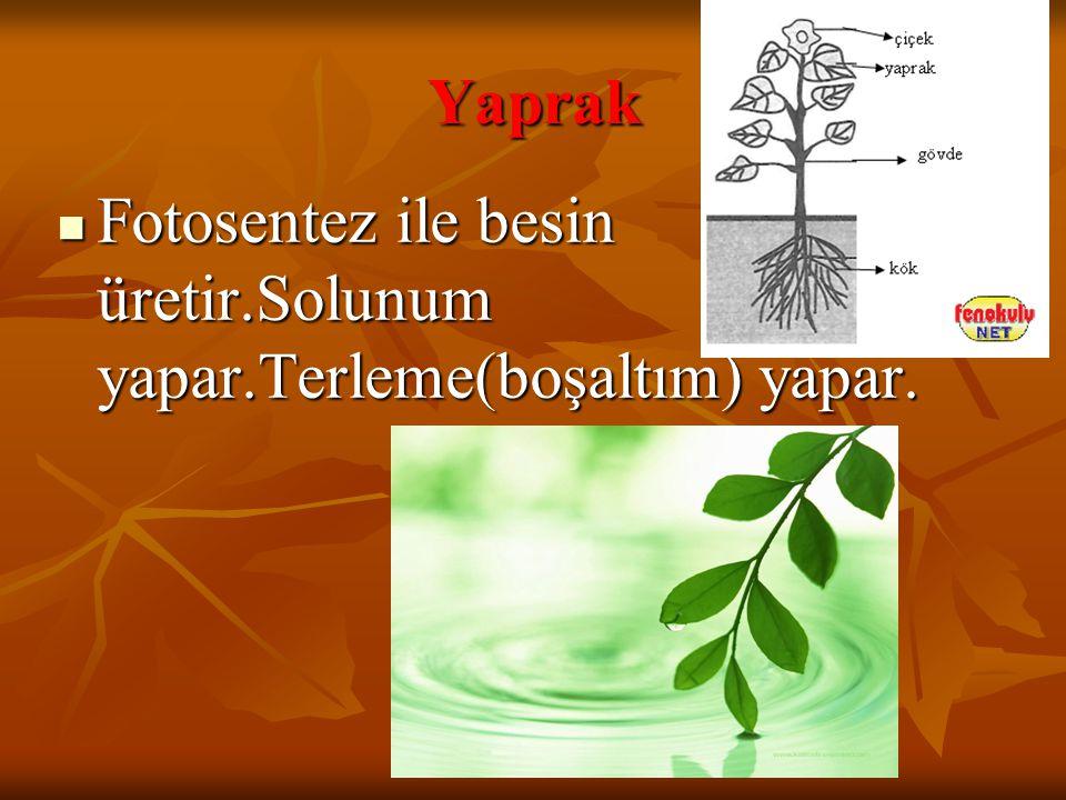Yaprak Fotosentez ile besin üretir.Solunum yapar.Terleme(boşaltım) yapar.