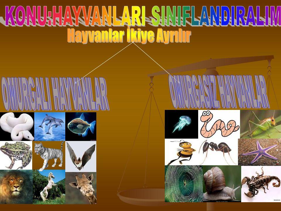KONU:HAYVANLARI SINIFLANDIRALIM Hayvanlar İkiye Ayrılır