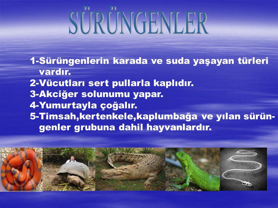 SÜRÜNGENLER 1-Sürüngenlerin karada ve suda yaşayan türleri vardır.