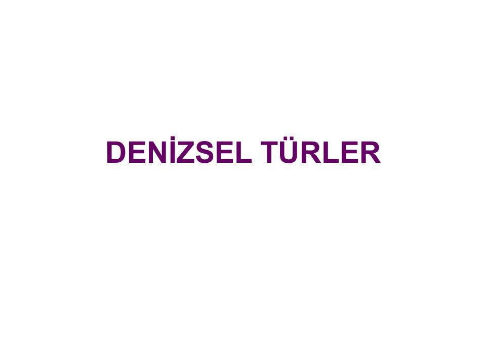 DENİZSEL TÜRLER