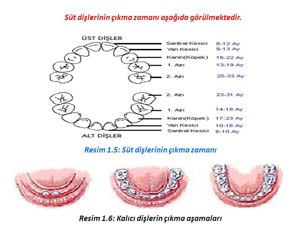 Süt dişlerinin çıkma zamanı aşağıda görülmektedir.