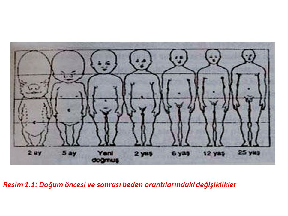 Resim 1.1: Doğum öncesi ve sonrası beden orantılarındaki değişiklikler