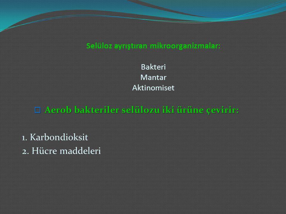 Selüloz ayrıştıran mikroorganizmalar: Bakteri Mantar Aktinomiset