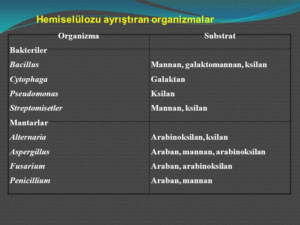 Hemiselülozu ayrıştıran organizmalar