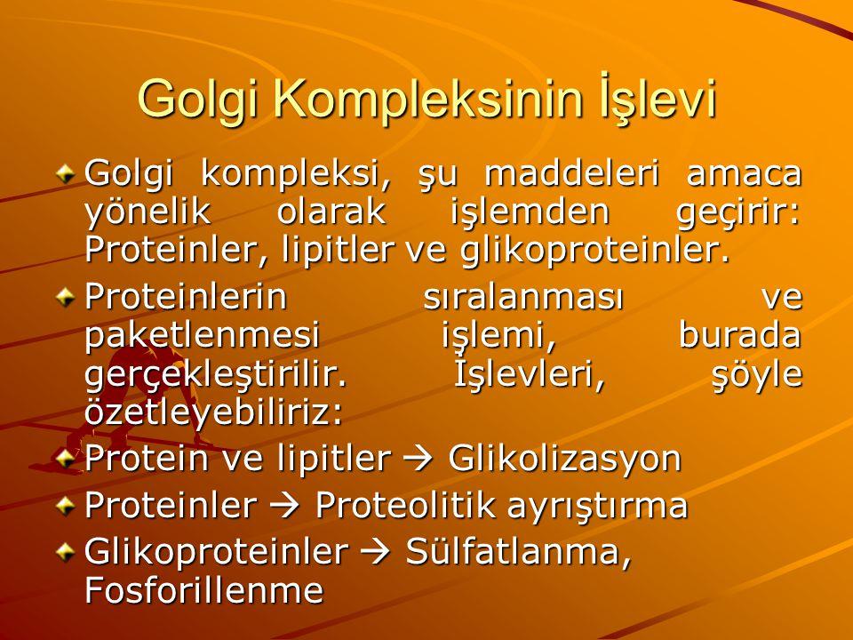 Golgi Kompleksinin İşlevi