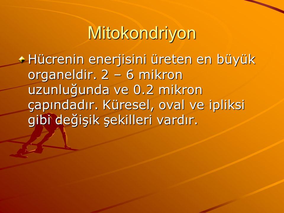 Mitokondriyon