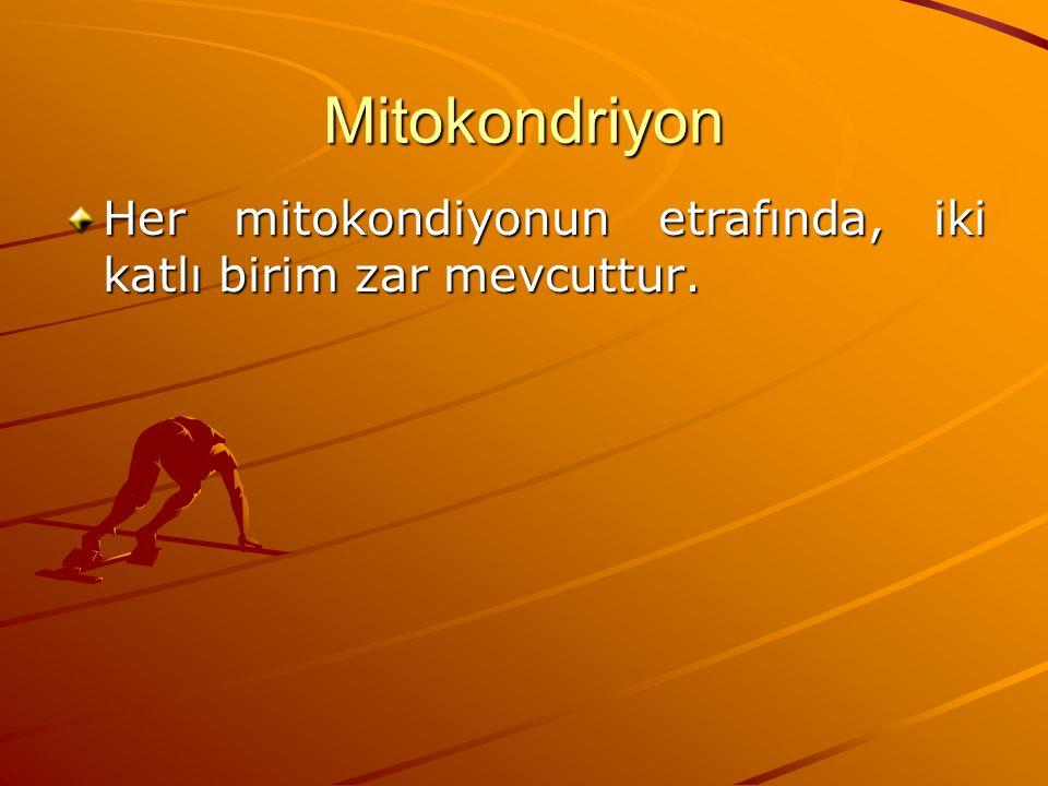 Mitokondriyon Her mitokondiyonun etrafında, iki katlı birim zar mevcuttur.