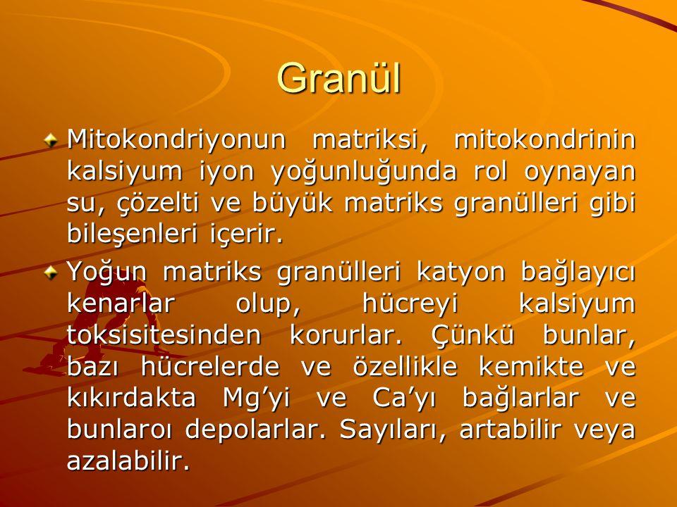 Granül