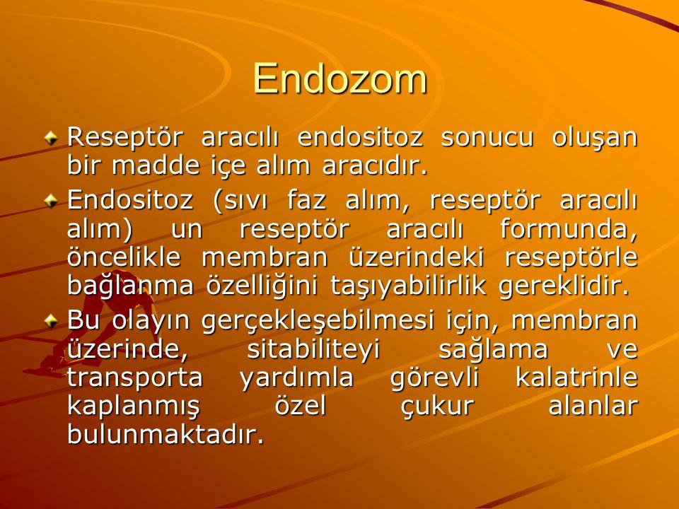 Endozom Reseptör aracılı endositoz sonucu oluşan bir madde içe alım aracıdır.