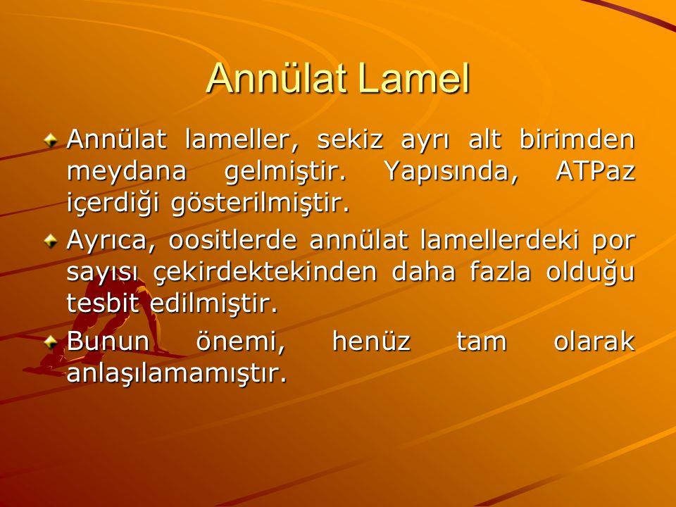 Annülat Lamel Annülat lameller, sekiz ayrı alt birimden meydana gelmiştir. Yapısında, ATPaz içerdiği gösterilmiştir.