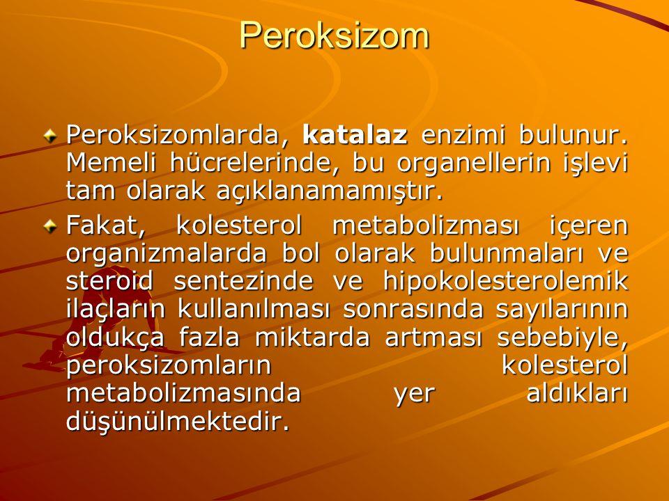 Peroksizom Peroksizomlarda, katalaz enzimi bulunur. Memeli hücrelerinde, bu organellerin işlevi tam olarak açıklanamamıştır.