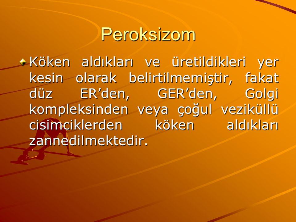Peroksizom