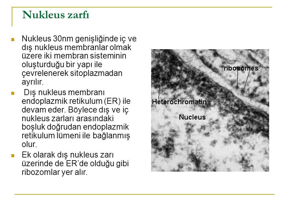 Nukleus zarfı