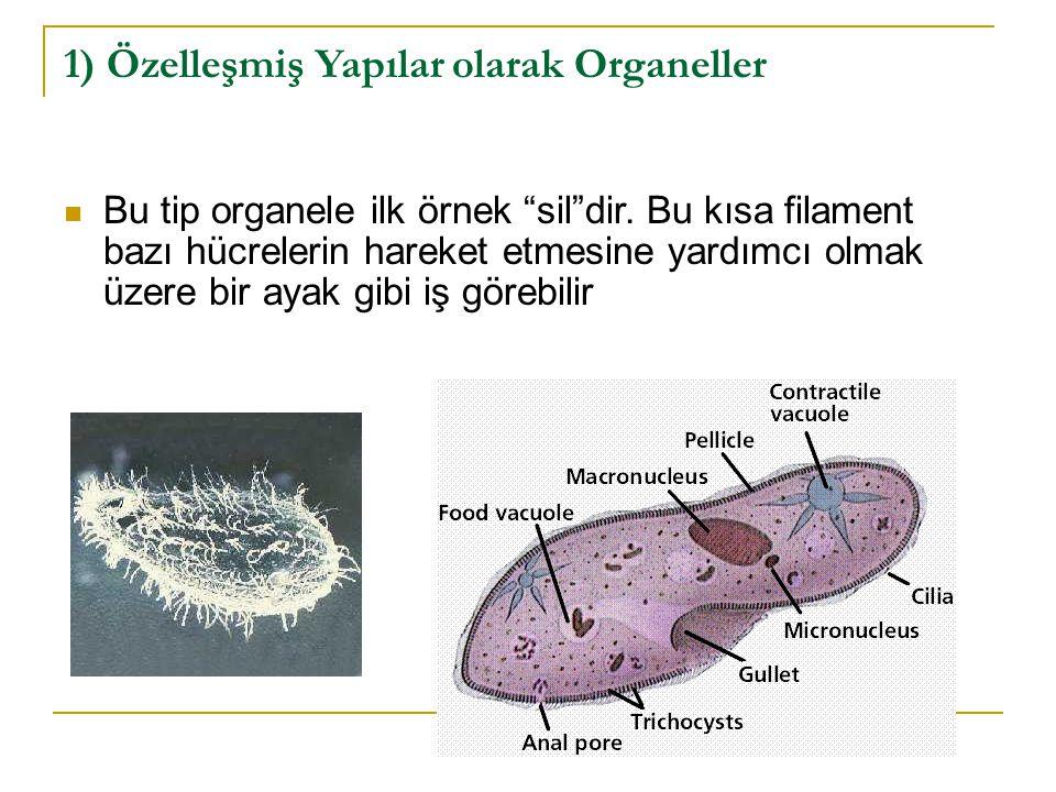 1) Özelleşmiş Yapılar olarak Organeller