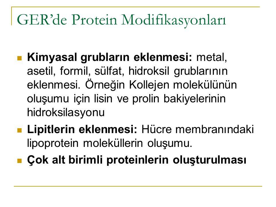 GER'de Protein Modifikasyonları