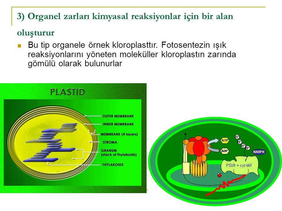 3) Organel zarları kimyasal reaksiyonlar için bir alan oluşturur