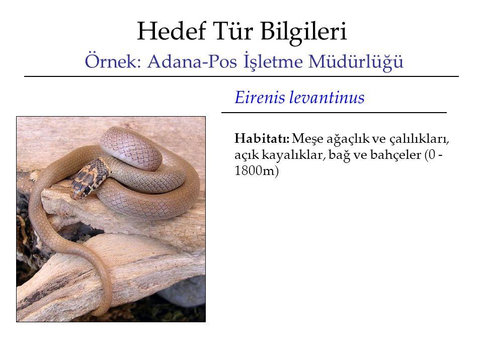 Hedef Tür Bilgileri Örnek: Adana-Pos İşletme Müdürlüğü