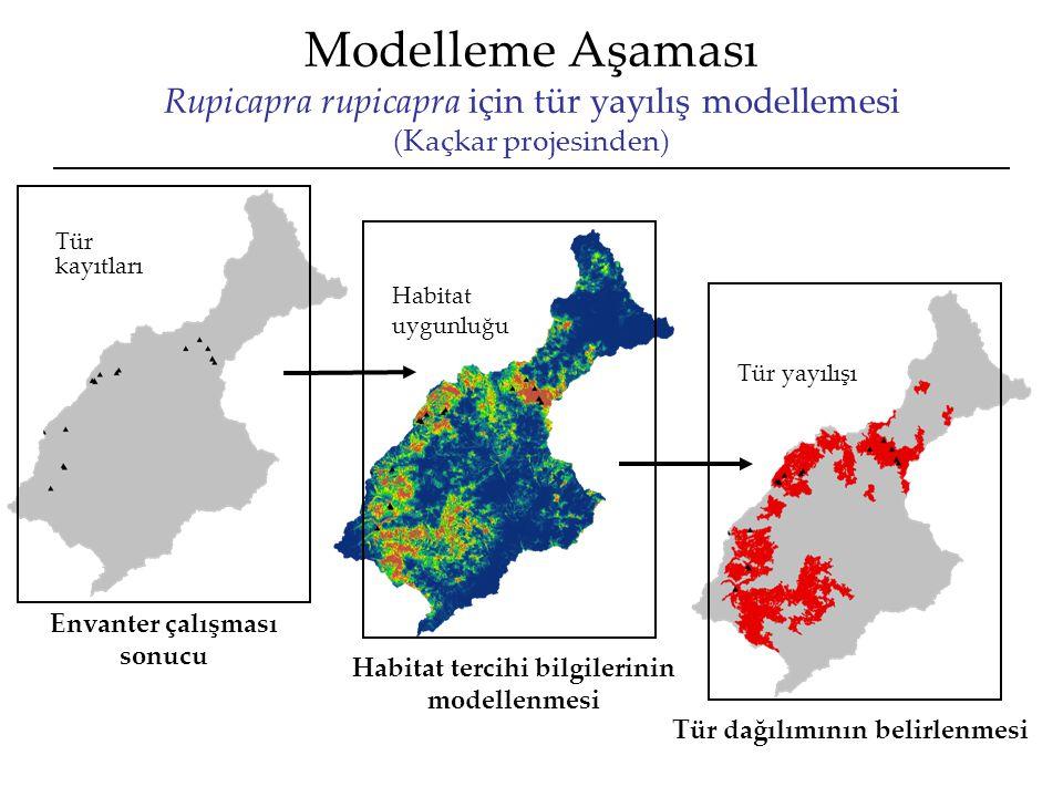 Modelleme Aşaması Rupicapra rupicapra için tür yayılış modellemesi (Kaçkar projesinden)