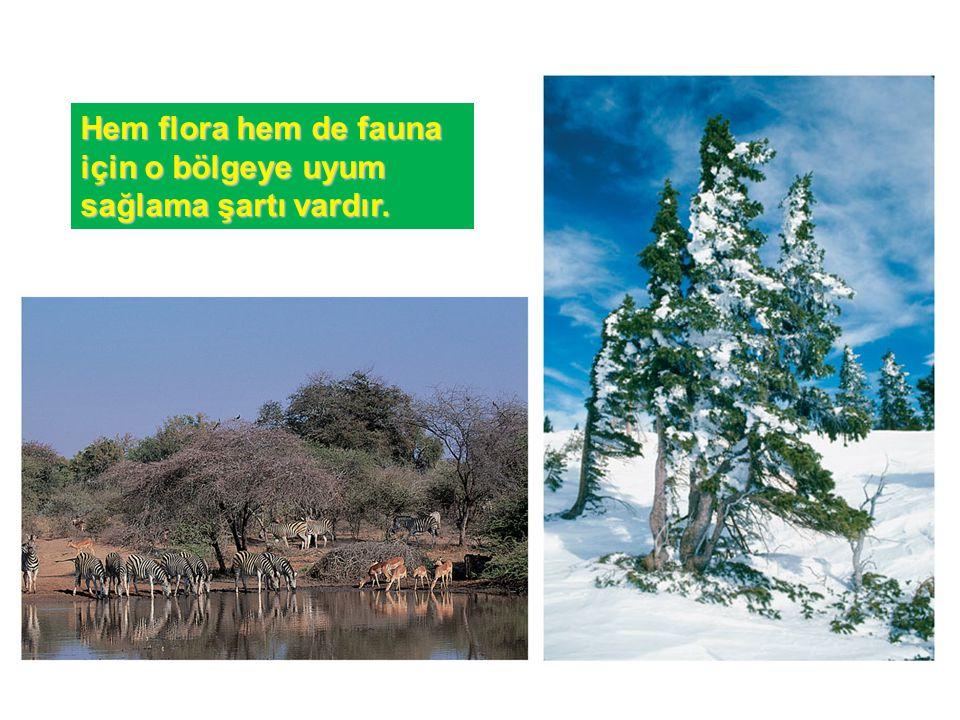 Hem flora hem de fauna için o bölgeye uyum sağlama şartı vardır.