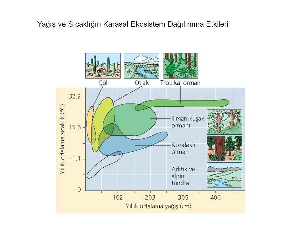 Yağış ve Sıcaklığın Karasal Ekosistem Dağılımına Etkileri
