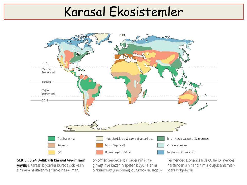 Karasal Ekosistemler