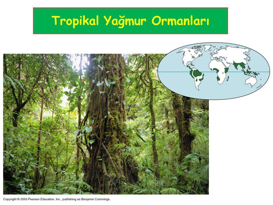 Tropikal Yağmur Ormanları
