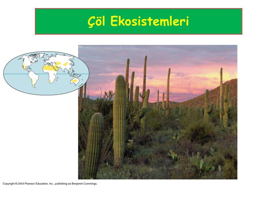 Çöl Ekosistemleri