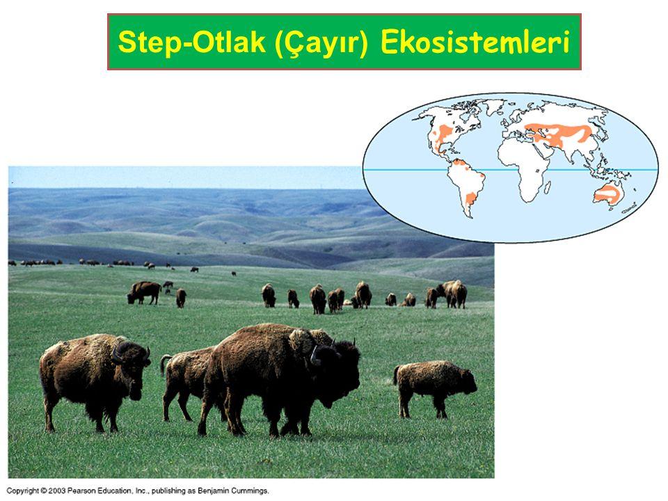 Step-Otlak (Çayır) Ekosistemleri