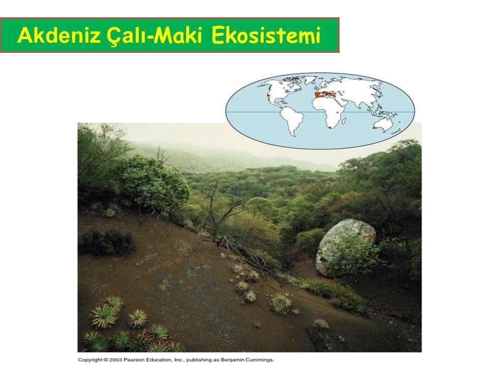 Akdeniz Çalı-Maki Ekosistemi