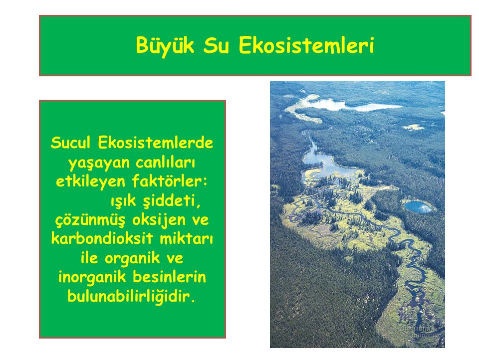 Büyük Su Ekosistemleri