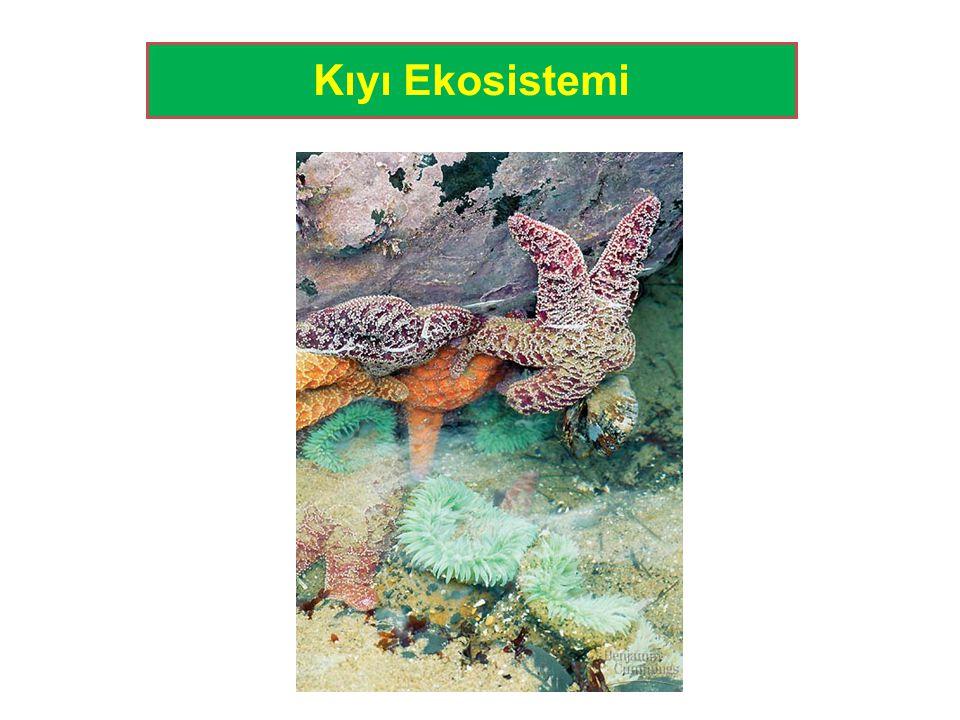 Kıyı Ekosistemi