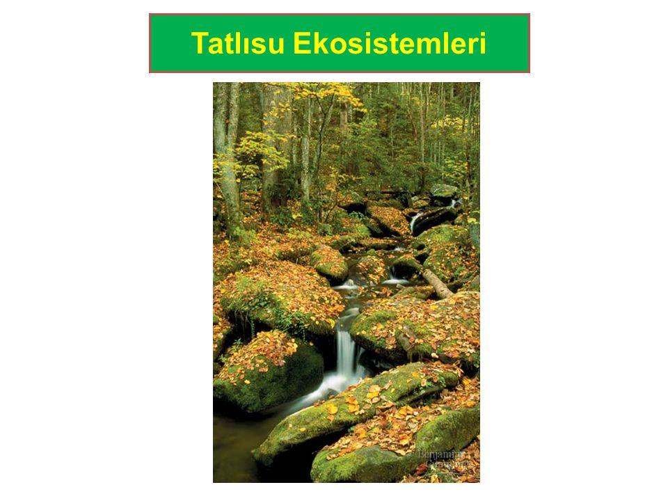 Tatlısu Ekosistemleri