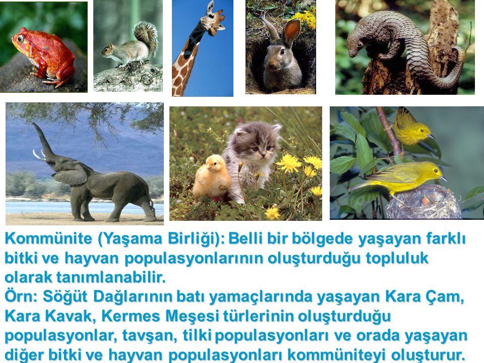 Kommünite (Yaşama Birliği): Belli bir bölgede yaşayan farklı bitki ve hayvan populasyonlarının oluşturduğu topluluk olarak tanımlanabilir.