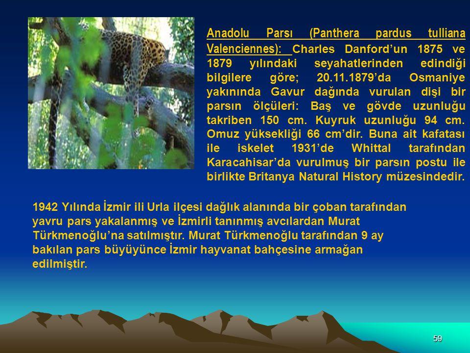 Anadolu Parsı (Panthera pardus tulliana Valenciennes): Charles Danford'un 1875 ve 1879 yılındaki seyahatlerinden edindiği bilgilere göre; 20.11.1879'da Osmaniye yakınında Gavur dağında vurulan dişi bir parsın ölçüleri: Baş ve gövde uzunluğu takriben 150 cm. Kuyruk uzunluğu 94 cm. Omuz yüksekliği 66 cm'dir. Buna ait kafatası ile iskelet 1931'de Whittal tarafından Karacahisar'da vurulmuş bir parsın postu ile birlikte Britanya Natural History müzesindedir.