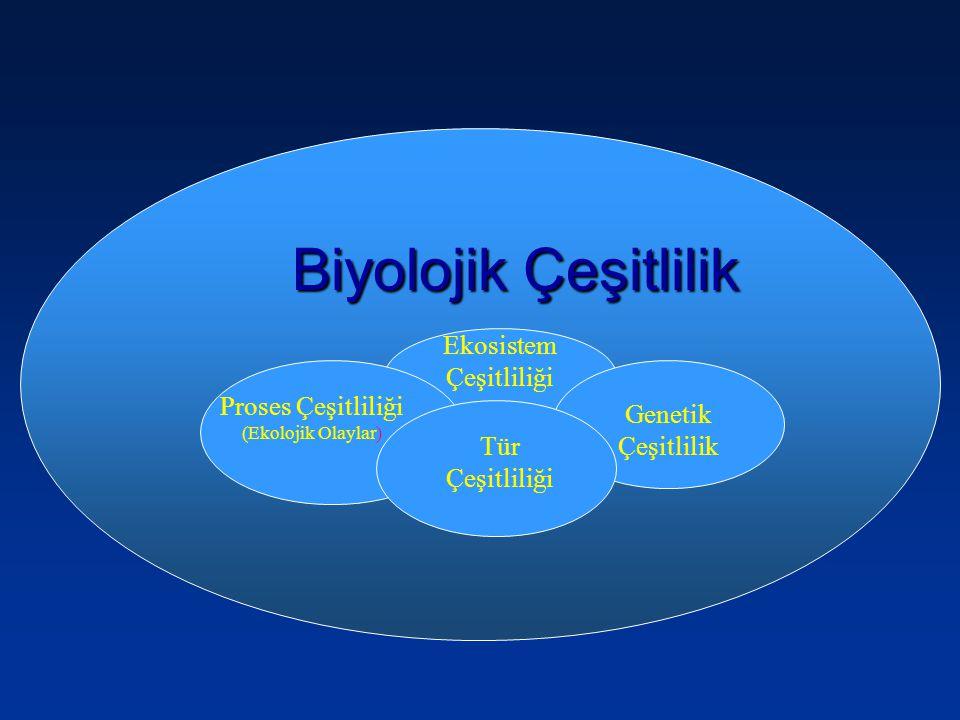 Biyolojik Çeşitlilik Ekosistem Çeşitliliği