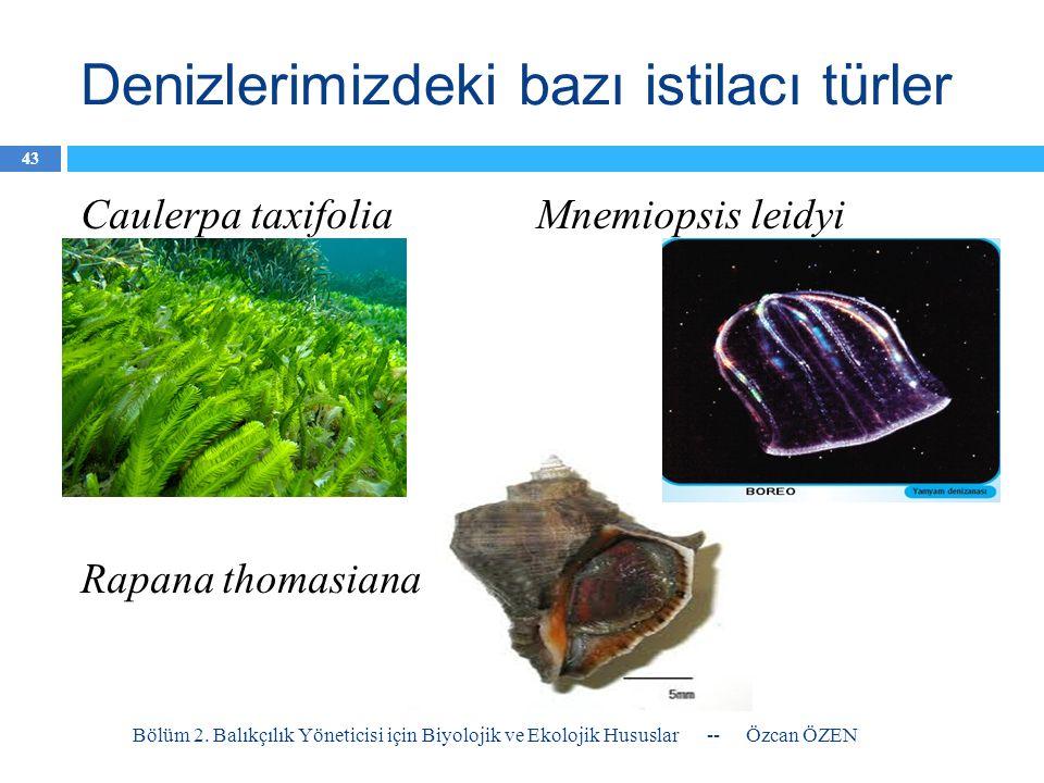 Denizlerimizdeki bazı istilacı türler