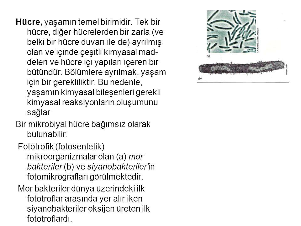 Hücre, yaşamın temel birimidir