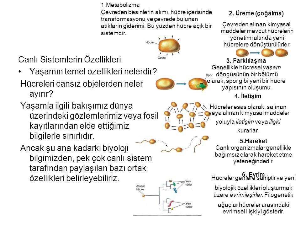 Canlı Sistemlerin Özellikleri Yaşamın temel özellikleri nelerdir