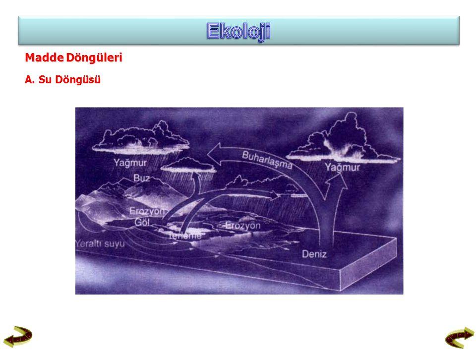 Ekoloji Madde Döngüleri A. Su Döngüsü