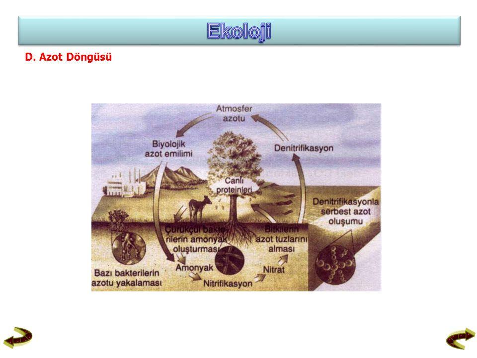 Ekoloji D. Azot Döngüsü