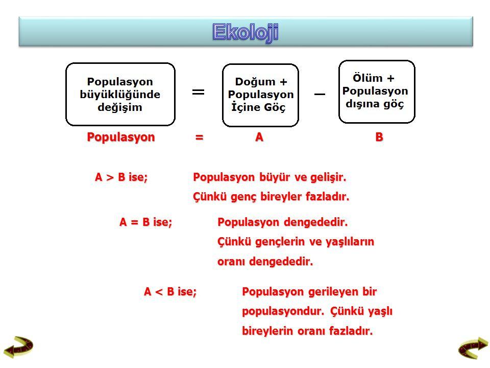 Ekoloji Populasyon = A B